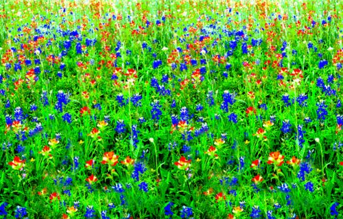 Wildflowers Corobuff - Product #1325